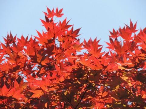 ○○の秋にしたい!【日刊ぶっちーvol.9】