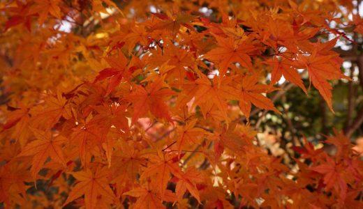 紅葉とカフェを満喫してさらなる高みを目指して京都と東京に行ってきます!iPhoneからリアルタイム更新目指します!