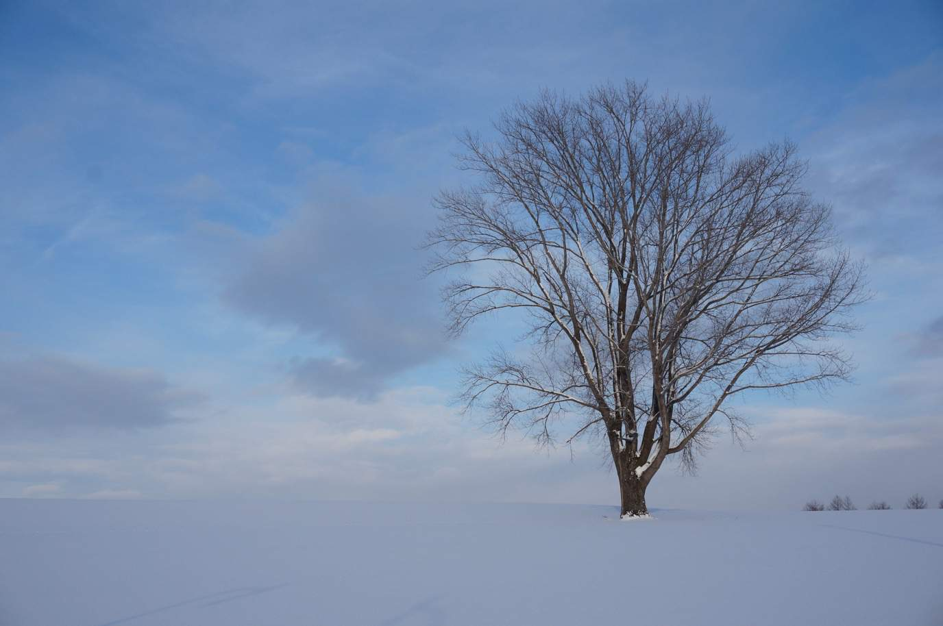 観光タクシーを使って冬の美瑛観光!幻想的で切なくなるような素晴らしい風景が待っていた。【日本一周鉄道旅行記その8】