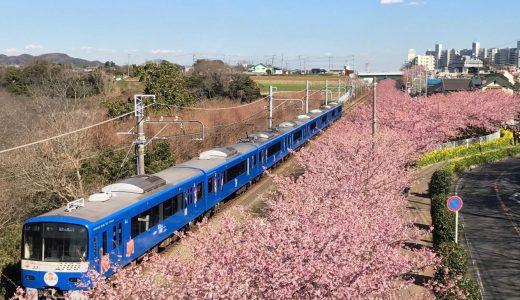 満開の河津桜が凄い!コスパ最高な「みさきまぐろきっぷ」を使って三浦海岸日帰り旅!まぐろに温泉も満喫してひと足早い春を堪能してきたぞ♪