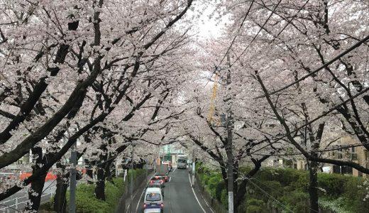 【アドレスV125S】原付二種で都内の桜スポットを巡るプチツーリングの旅♪