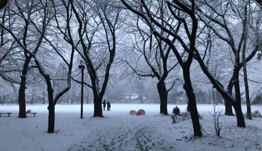 4年ぶりに東京で大雪!林試の森公園に行くとそこには一面銀世界が待っていた。【ぶっちーの日常】
