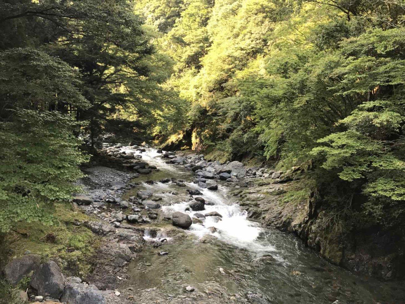 道志川温泉紅椿の湯